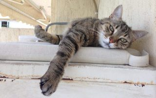 man-60-gets-suspended-sentence-after-spearing-cat
