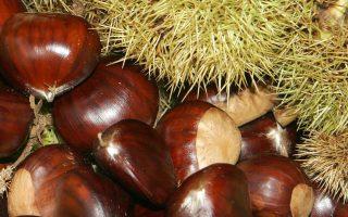 greek-chestnut-seller-convicted-over-lack-of-license