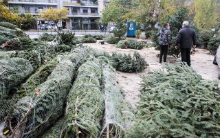 christmas-trees-await-a-home-while-growers-fret