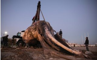 dead-whale-found-floating-off-piraeus0