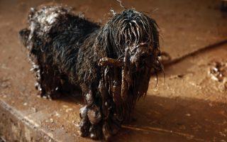 dog-survives-deadly-floods-in-western-athens