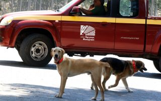 argos-running-program-to-control-and-protect-strays