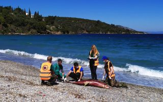 more-dolphins-die-in-aegean-sea-group-suspects-navy-drills