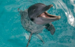 zoo-accused-of-exploiting-dolphins-in-pool-display
