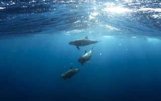 wwf-greece-spearheads-campaign-to-stop-oil-drilling-in-ionian-sea