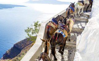 plea-to-protect-santorini-donkeys