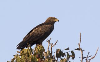 national-park-reports-deaths-of-two-rare-birds-from-wind-turbines