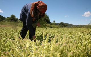 women-farmers-becoming-more-educated-report-shows