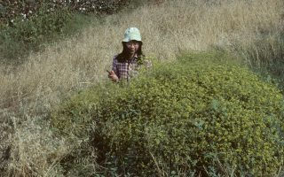 botanist-cataloguing-nature-s-treasures-in-greece-turns-to-amorgos