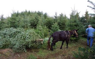 crisis-sees-drop-in-demand-for-real-christmas-trees