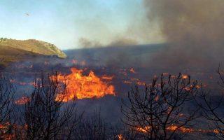 firefighters-battle-blaze-in-pine-forest-in-dafni-western-attica