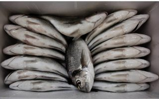 greek-banks-take-control-of-nireus-fish-farms