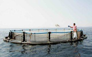 amerra-likely-to-net-local-fish-farming-enterprises
