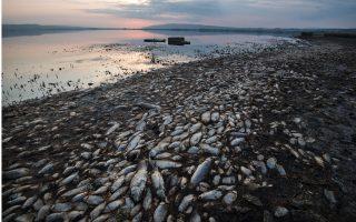 drought-hit-lake-koroneia-s-fish-population-hit