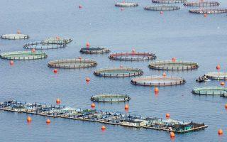 eu-oks-mubadala-aquaculture-deal