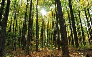 capturing-the-economic-benefits-of-sustainable-development0