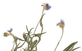 mount-athos-herbarium-thessaloniki-april-19-amp-8211-june-15