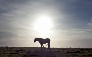 police-investigating-horses-shot-in-thesprotia