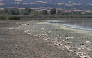 thousands-of-fish-dead-in-koroneia-lake-as-water-levels-drop-to-60cm