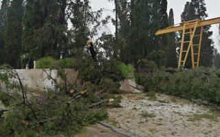 tourist-injured-by-fallen-tree-in-western-peloponnese0