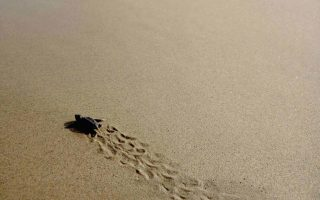eco-groups-seek-stop-to-violations-at-zakynthos-turtle-nesting-site