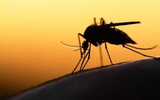 us-embassy-issues-health-alert-regarding-west-nile-virus