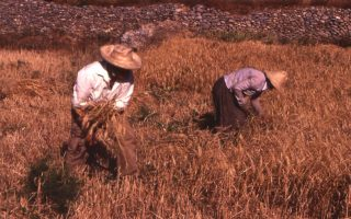 origin-of-agriculture-athens-may-6