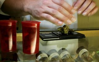 draft-bill-lays-down-rules-for-medical-cannabis-producers