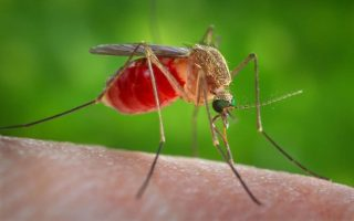 west-nile-death-toll-rises-to-20