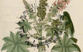 botanic-fictions-athens-september-11-14