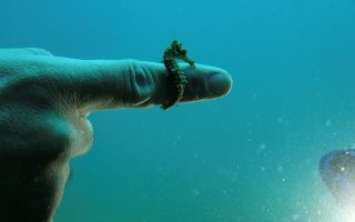 experts-seek-to-protect-rare-colony-of-seahorses-in-northern-greece