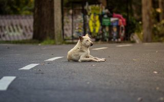 ngo-launches-initiative-for-stray-dogs-and-cats