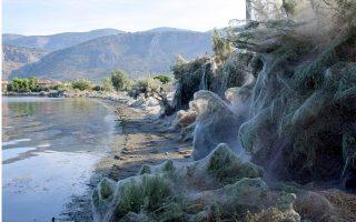 spider-population-explodes-on-lagoon-island-in-western-greece