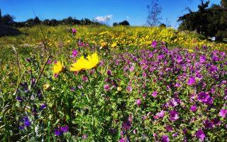 rites-of-spring