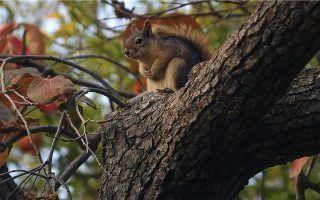from-its-parks-and-telephone-wires-athens-is-home-to-a-wealth-of-wildlife