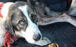 reports-of-animal-abuse-on-the-rise