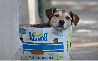 city-of-volos-launches-drive-to-microchip-pets