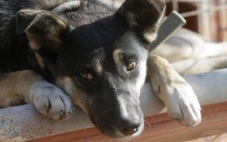 animal-shelter-quiz-evening-athens-november-17