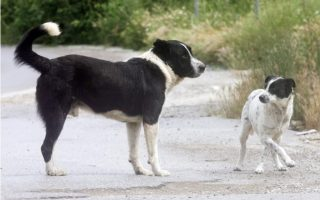 probe-launched-into-hymettus-animal-poisonings