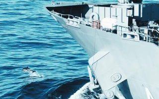 turkey-denies-aegean-dolphin-deaths-linked-to-navy-drill