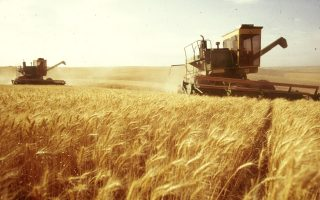 romania-lifts-export-restrictions-on-wheat-other-food-products