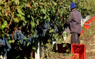 europe-amp-8217-s-wine-industry-may-suffer-with-global-warming-research-shows