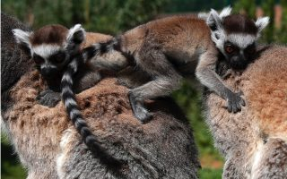 wildlife-goes-on-at-athens-zoo0