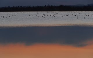 Flamingos search for food at a salt lake in the southern coastal city of Larnaca, in the eastern Mediterranean island of Cyprus.