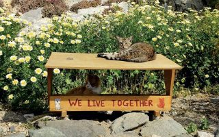 syros-initiative-points-the-way-in-protection-of-stray-animals