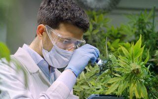 medical-cannabis-exports-bill