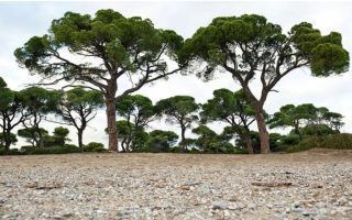 scrubland-does-not-qualify-as-forestland-advisory-council-says