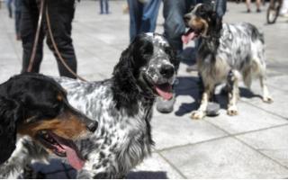 greek-dog-owners-protest-mandatory-sterilization-of-pets