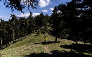 environmentalists-fear-windfarm-scars-on-mountain-forests