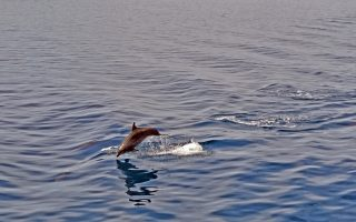 greece-s-dolphins-and-whales-in-peril